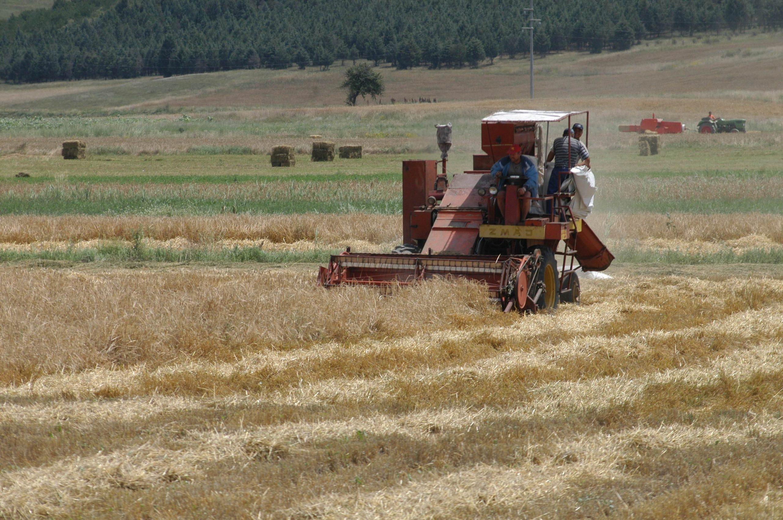 Минималната цена за пченица треба да e 12 денари по кг
